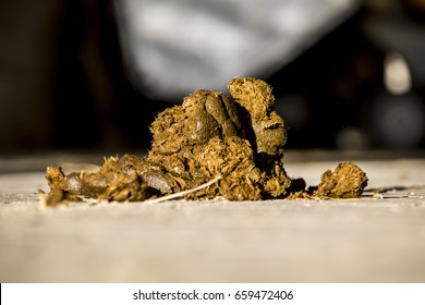 horse droppings on a street