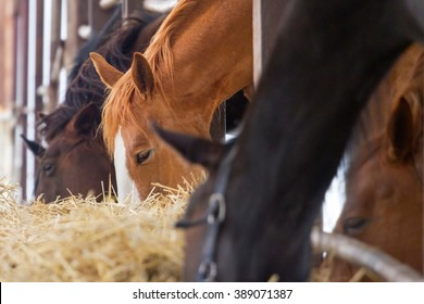 Horse eat in farm