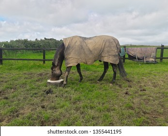 A horse eating food with the cloudy day, County Cork Ireland.