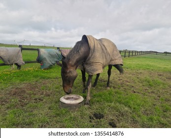 A horse eating food in the farm, County Cork Ireland.