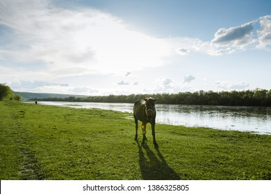 The horse eating the grass on the bank of the river