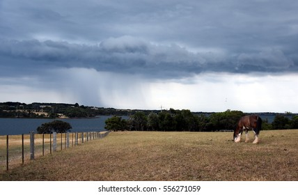 Horse eating grass on Churchill Island Heritage Farm (Victoria, Australia). Dramatic clouds and storm above Philip Island in the background.