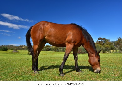 Horse eating grass on a plain with blue sky