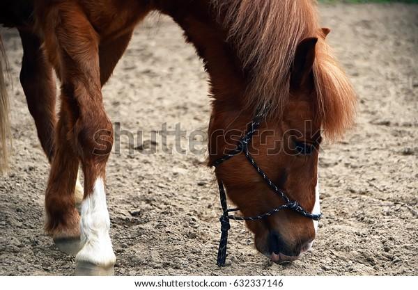 the horse eats