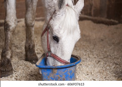 A horse eats from a bucket