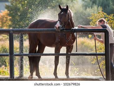 Horse enjoying the shower outdoor