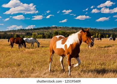 Horse enjoys in Yellowstone National Park, USA