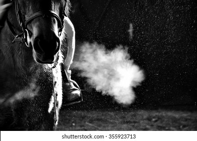 horse exhale