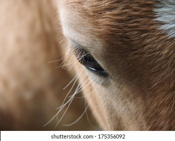 horse eye detail with eyelashes
