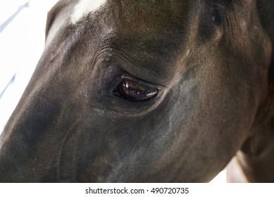 horse eye, head brown horse