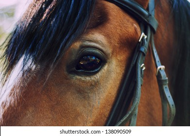 horse eye.close up.brown color