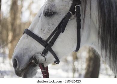 horse, eyes