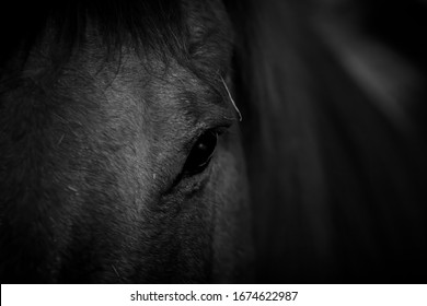 Horse face and eye in close up