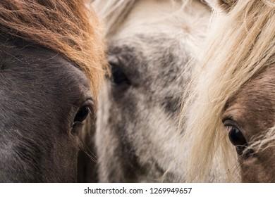 horse faces close up