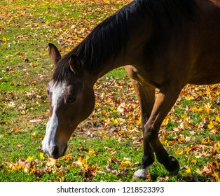 A horse with fall leaves behind it.