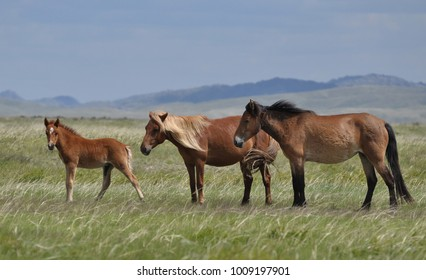 Horse family on a pasture.
