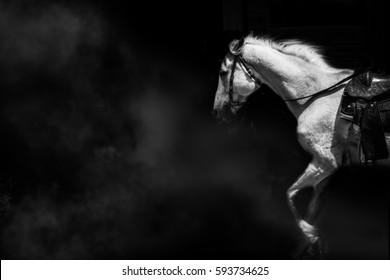 Horse fantasy beautiful white action concept power stilllife,cloud isolated black on background