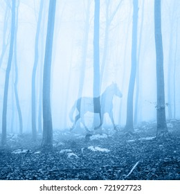 Horse in the fantasy blue colored foggy fairytale forest landscape. Double exposure technique used.
