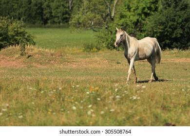 A horse in a farm field