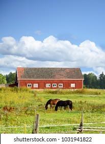 Horse farm in Finland
