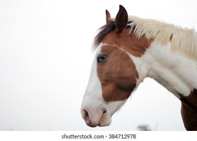 Horse in farm house