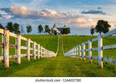 Horse Farm, Kentucky Bluegrass