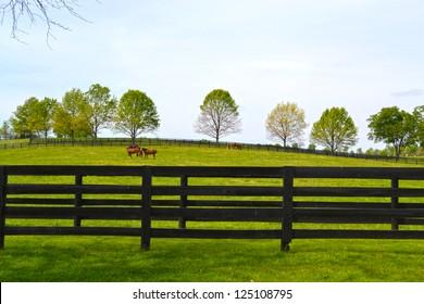 Horse Farm in Kentucky's Horse Country