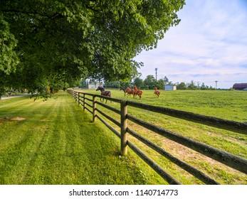 Horse farm ranch  landscape in toronto canada