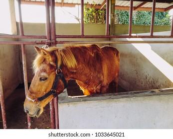 Horse in farm thailand.