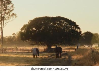 Horse farmland early morning light , queensland australia