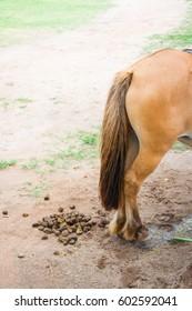 horse feces