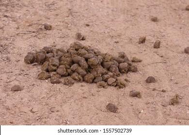 horse feces on a street