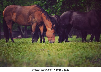 Horse feeding outdoors