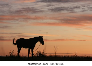 Horse in the field at dawn