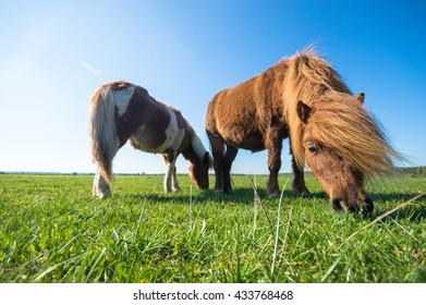 horse in a field, farm animals, nature series