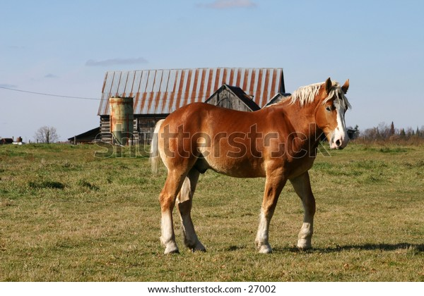 Horse in field with farm buildings in background