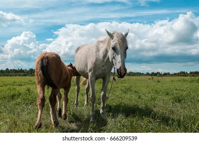 the horse and foal