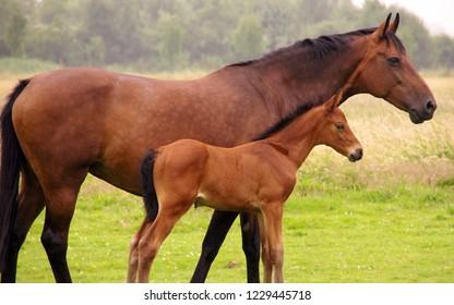 Horse and foal in the field