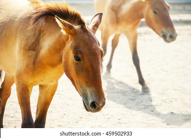 Horse with a foal on the farm paddock
