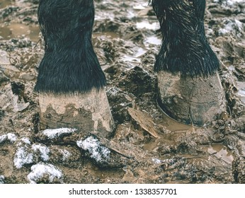 Horse footprints of the hooves. Horses on the muddy track,  snow and grass stalks