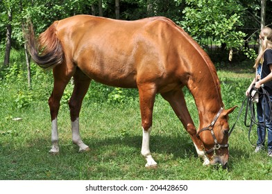 A horse in a forest glade. In early summer horse feasting on fresh juicy grass.