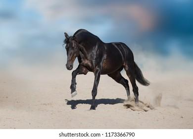 Horse free run in desert dust against beautiful sky