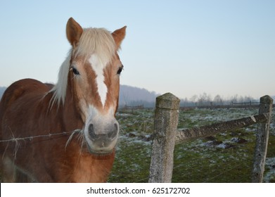 Horse in French Country side
