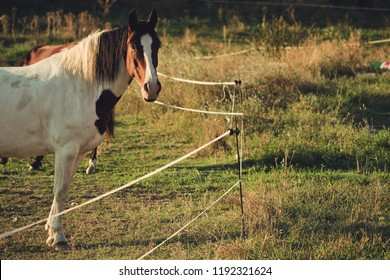 horse in front of electrified fence