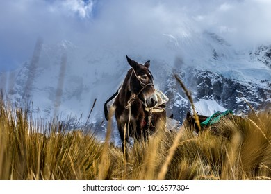 Horse in front of mountain Salkantay, Peru.