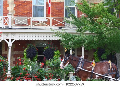 Horse in front of vintage architecture and springtime flowers in Niagara-on-the-Lake, Canada