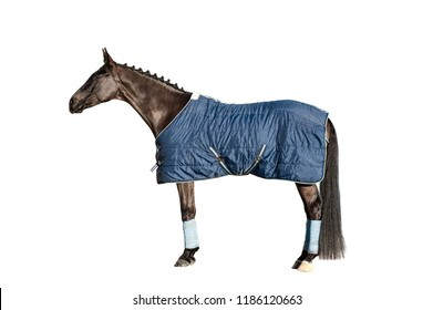 Horse full length in a blanket isolated standing