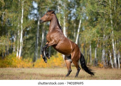 horse galloping in the fields