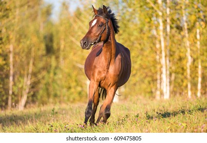 Horse galloping on grass
