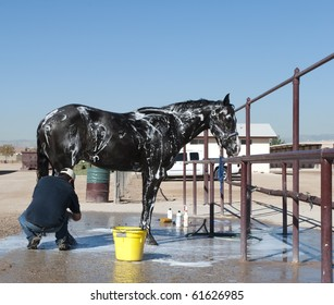 Horse getting a bath
